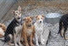 В Дзержинске начнется отлов бездомных животных