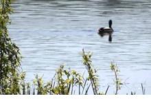 В Дзержинске разработали проект благоустройства парка за Утиным озером