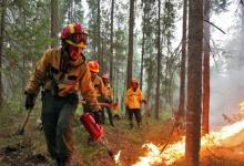 Как дзержинцам предотвратить лесной пожар: инструкция для отдыхающих