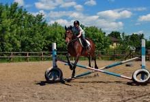 Праздник лошади пройдет в Дзержинске 27 августа