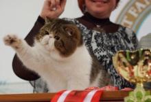 Выставка 'экзотических кошек пройдет в Дзержинске