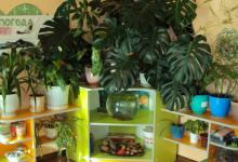 В Дзержинске продолжается проект «Растения дарят здоровье детям»