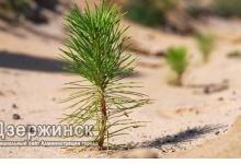 В Дзержинске завершается Год экологии и начинается Год волонтера