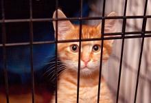 Бездомных животных в Дзержинске отловят и поместят в приют на время ЧМ-2018
