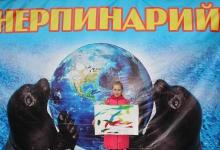 Шоу байкальских нерп проходит в Дзержинск