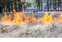 Пожар из-за вспыхнувшего тополиного пуха случился в Дзержинске