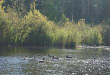 В Дзержинске выбирают название для природного парка