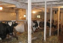 В Дзержинске стартовал конкурс на лучшее подсобное хозяйство