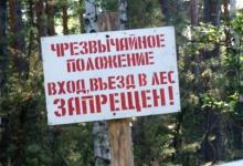 Вступил запрет на посещение лесов под Дзержинском
