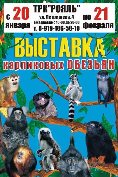 Выставка обезьян в Дзержинске