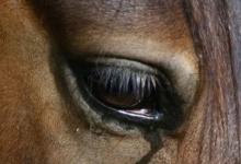 В Дзержинске хозяйка лошадей продала их на убой