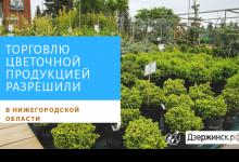 Торговлю цветочной продукцией и садовой техникой разрешили в Дзержинске