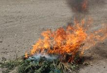 В Дзержинске уничтожили 134 куста конопли